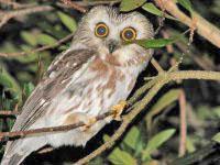332-Owls-pic-1-200x150